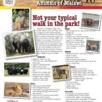 Parks_Animals_of_Malawi